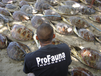 Mission Deep Blue: Operation Bali Seaturtles