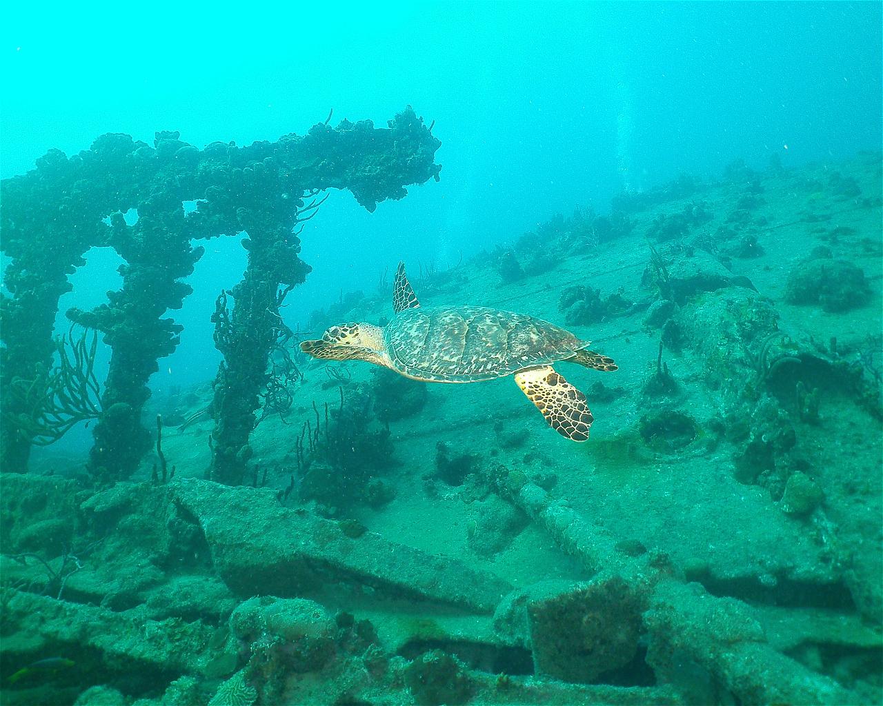 RMS Rhone (Wreck)