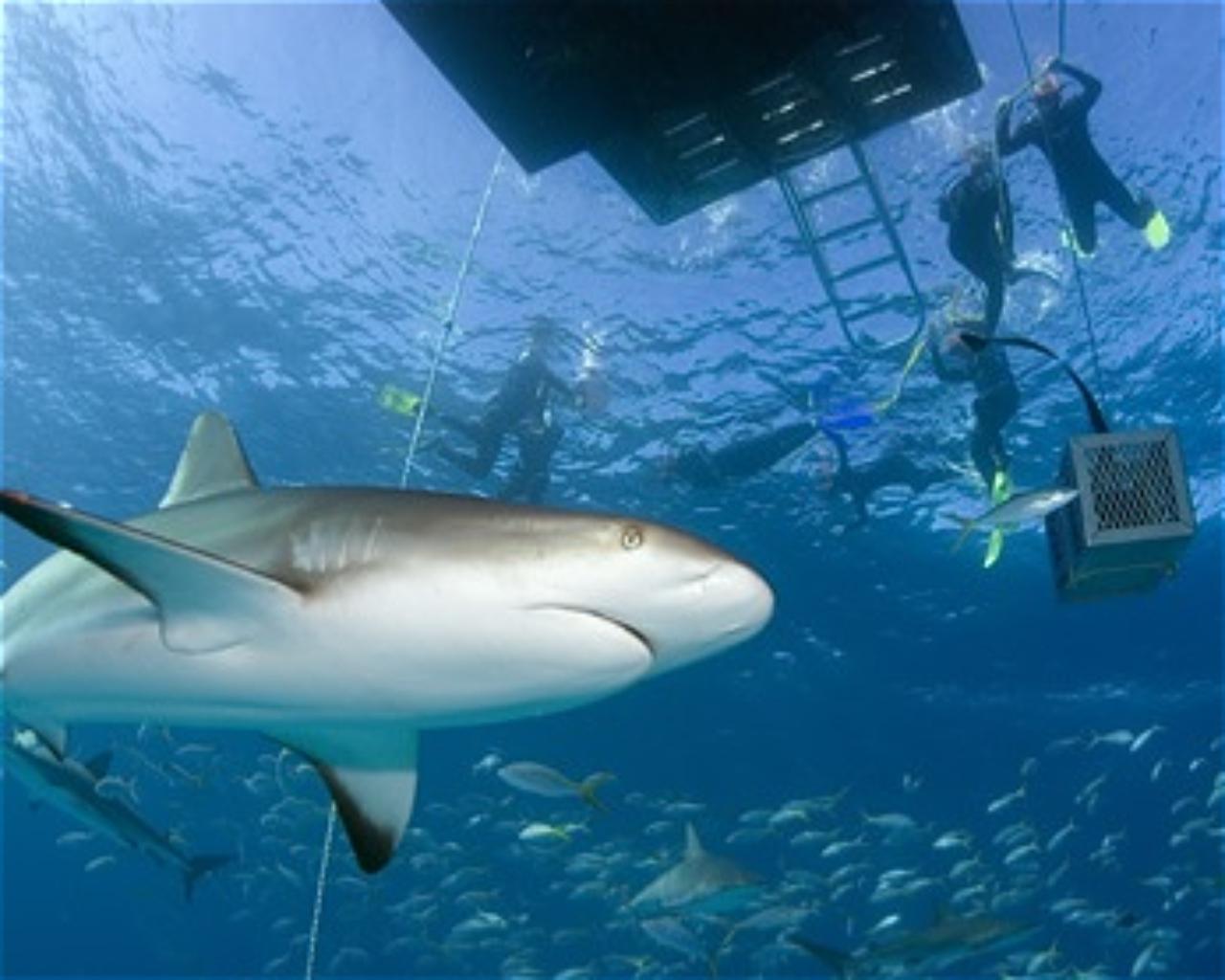 Stuart Cove's Shark Arena
