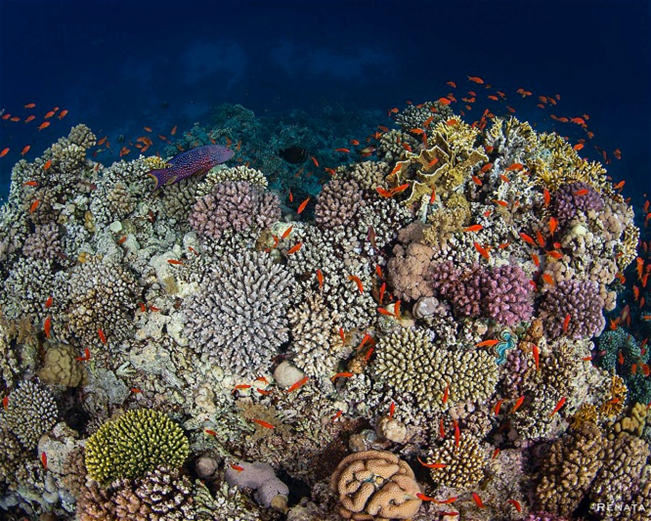 Woodhouse Reef