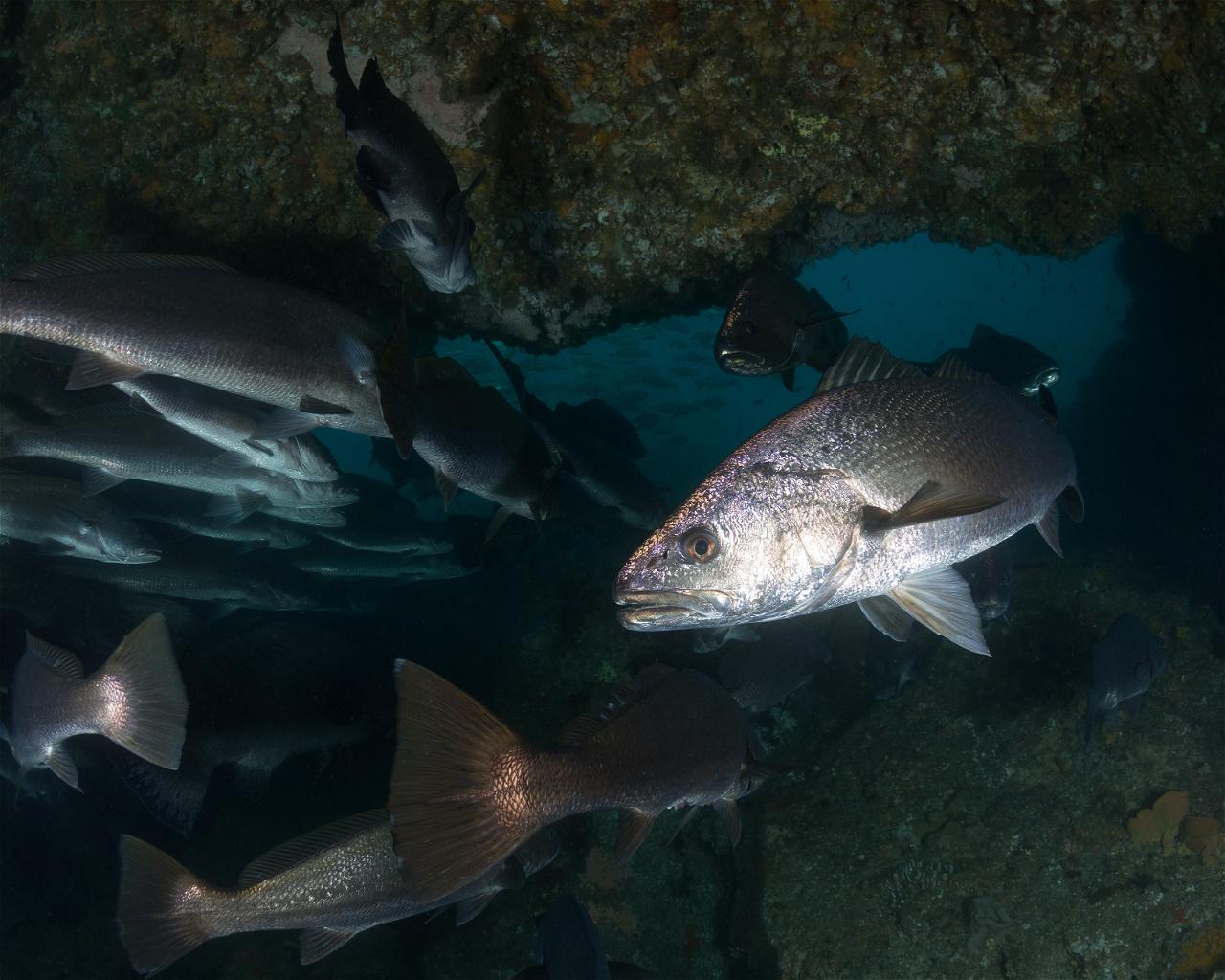 Julian Rocks - Cod Hole
