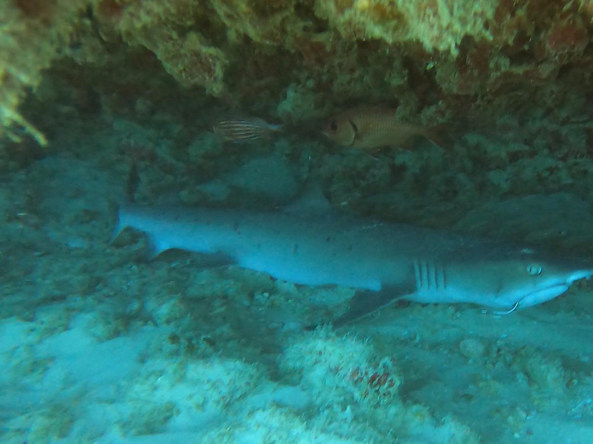 Nautilus Reef