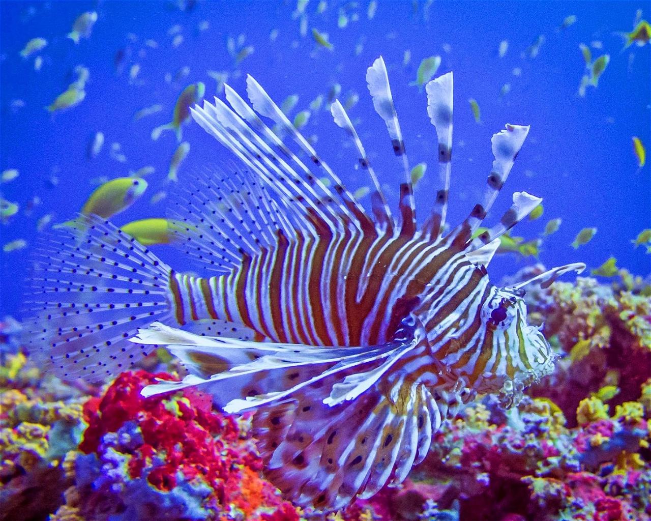Sexy Reef / Hoara Huraa