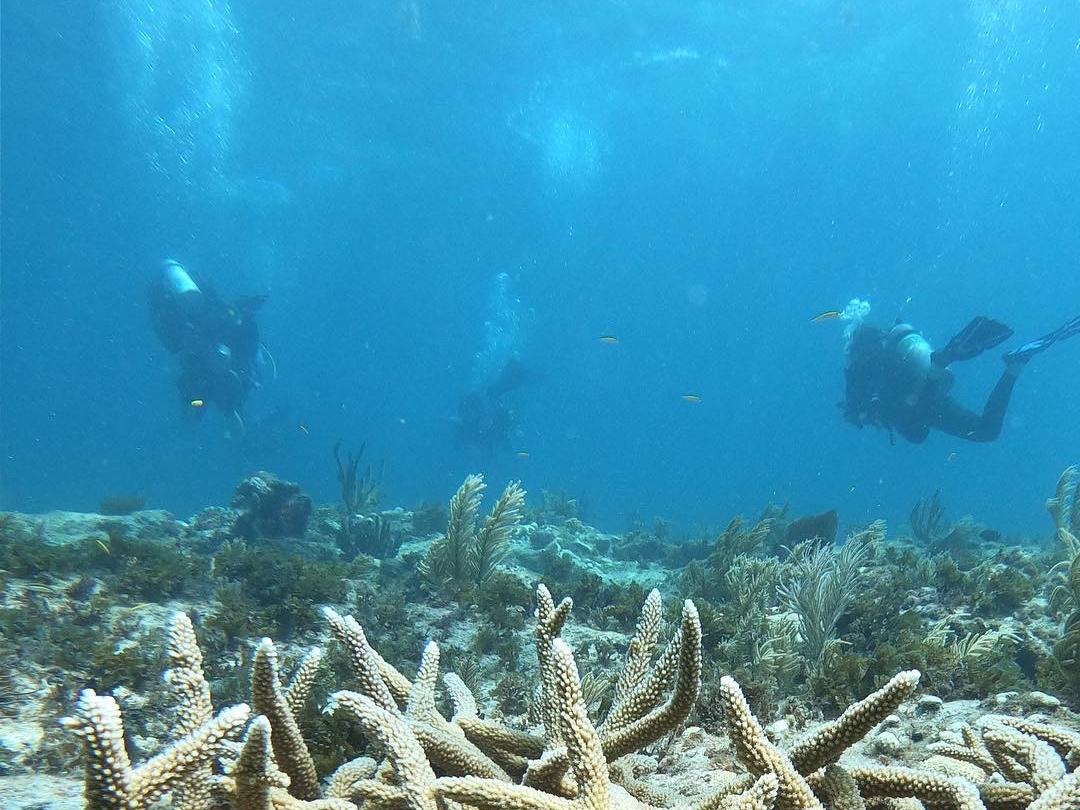 Pickles Reef