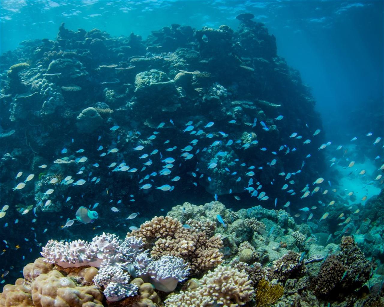 Turtle Bommie, Saxon Reef