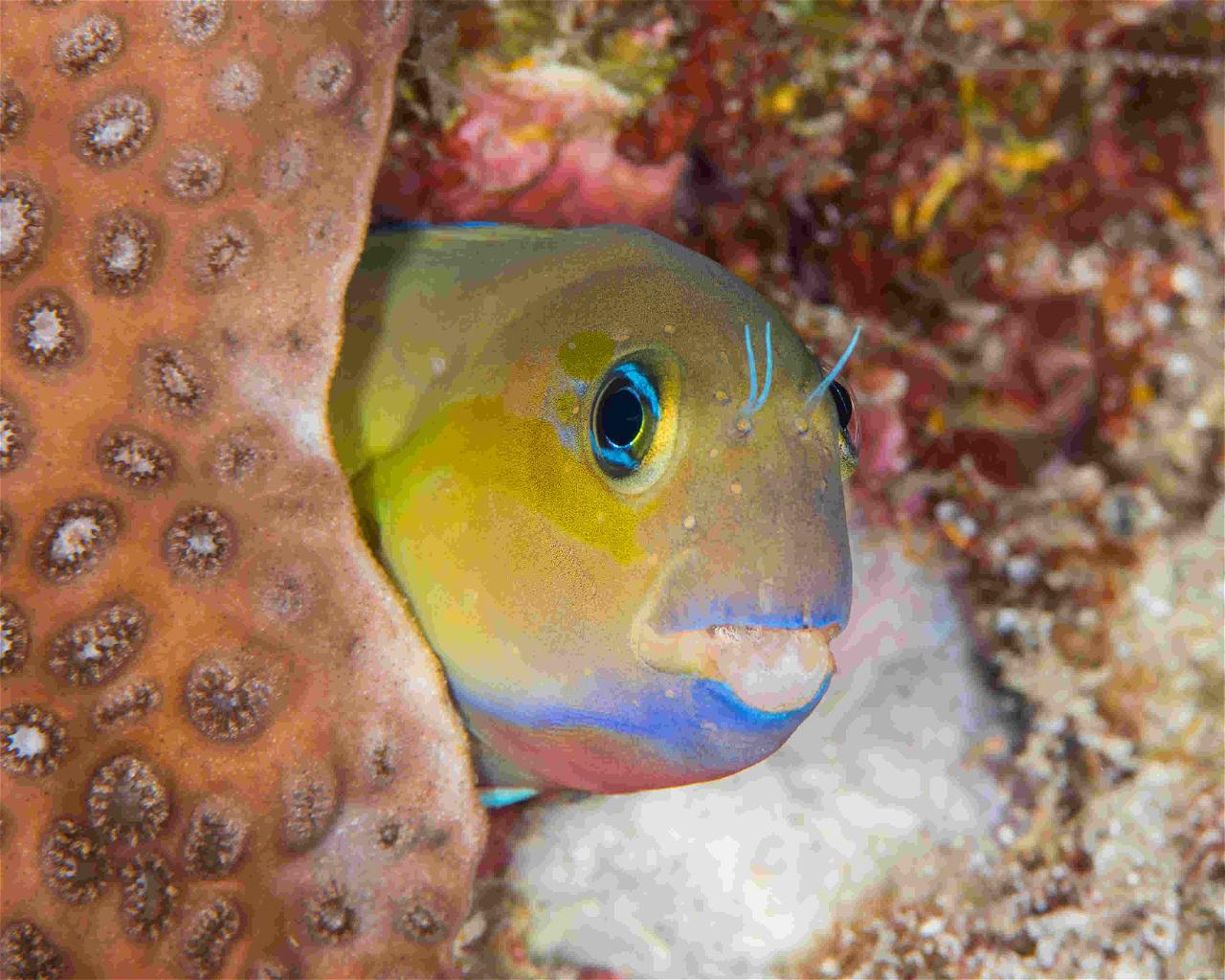 Snake Reef, Mauritius