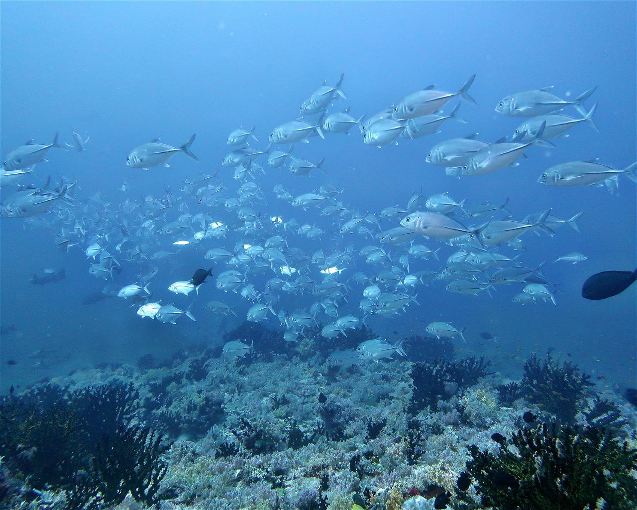 HP Reef / Rainbow Reef