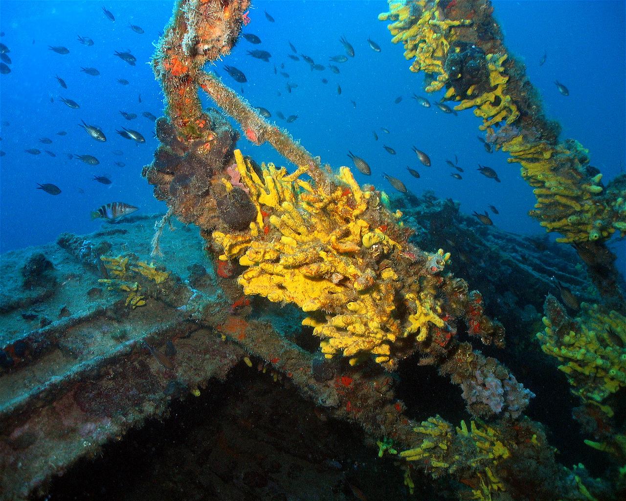 Francesca di Rimini (Wreck)