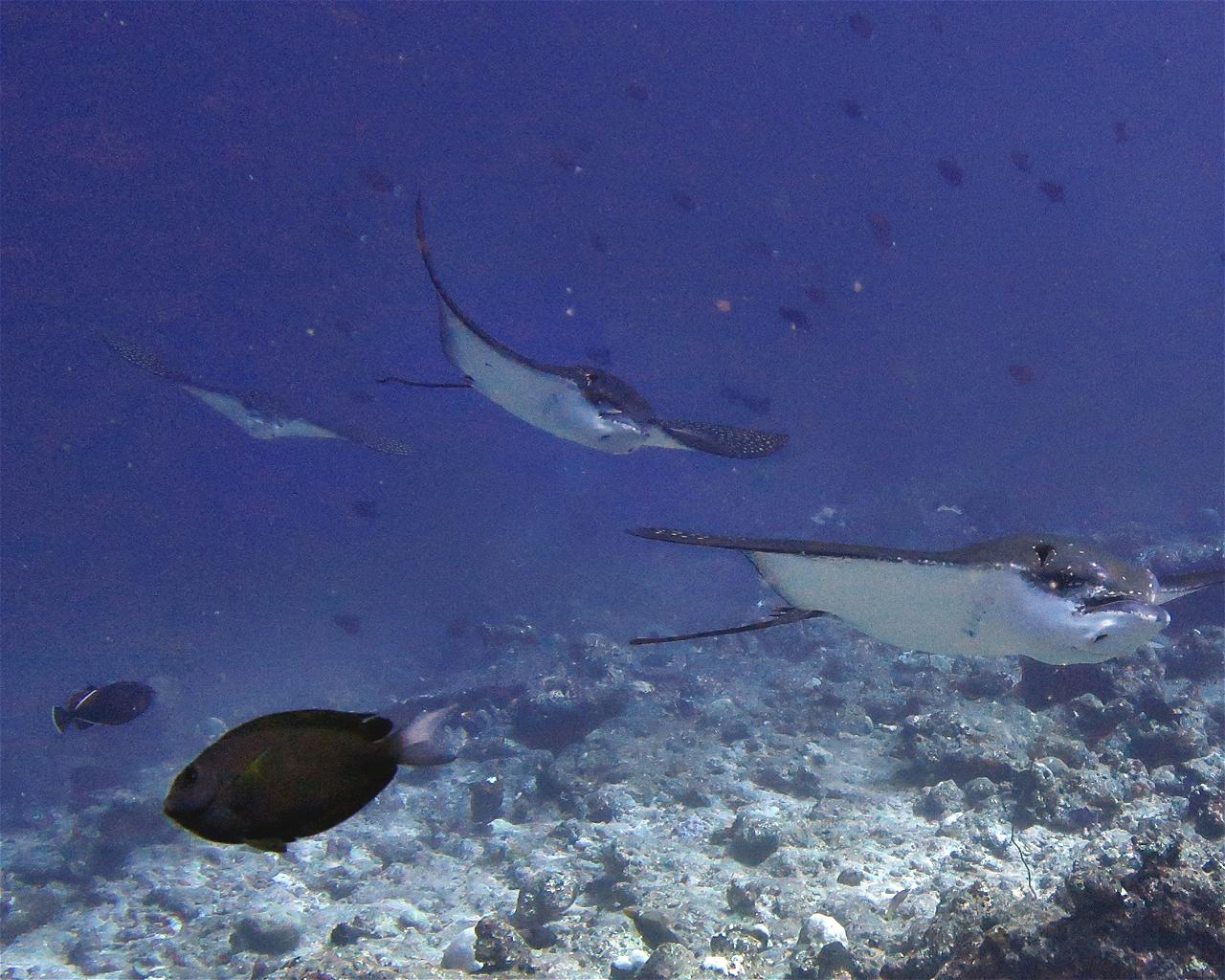 Himmafushi Corner
