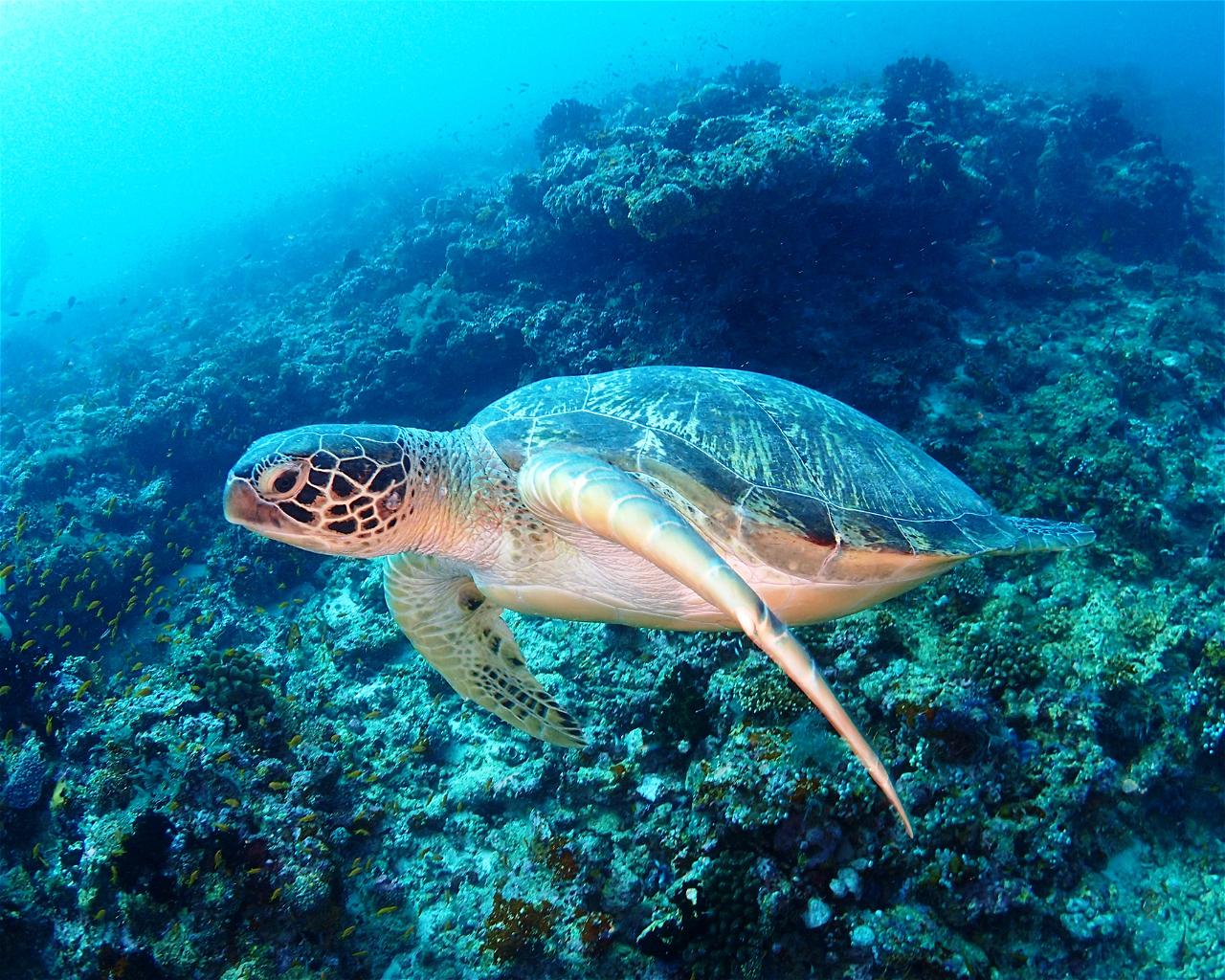 Olhuveli House Reef