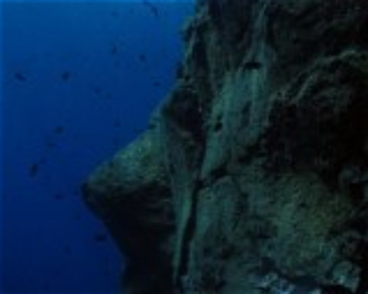 Groupers Reef