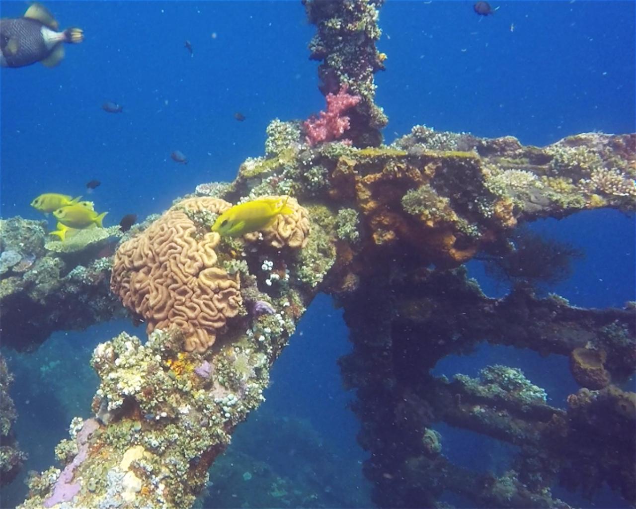 USAT Liberty (Wreck)