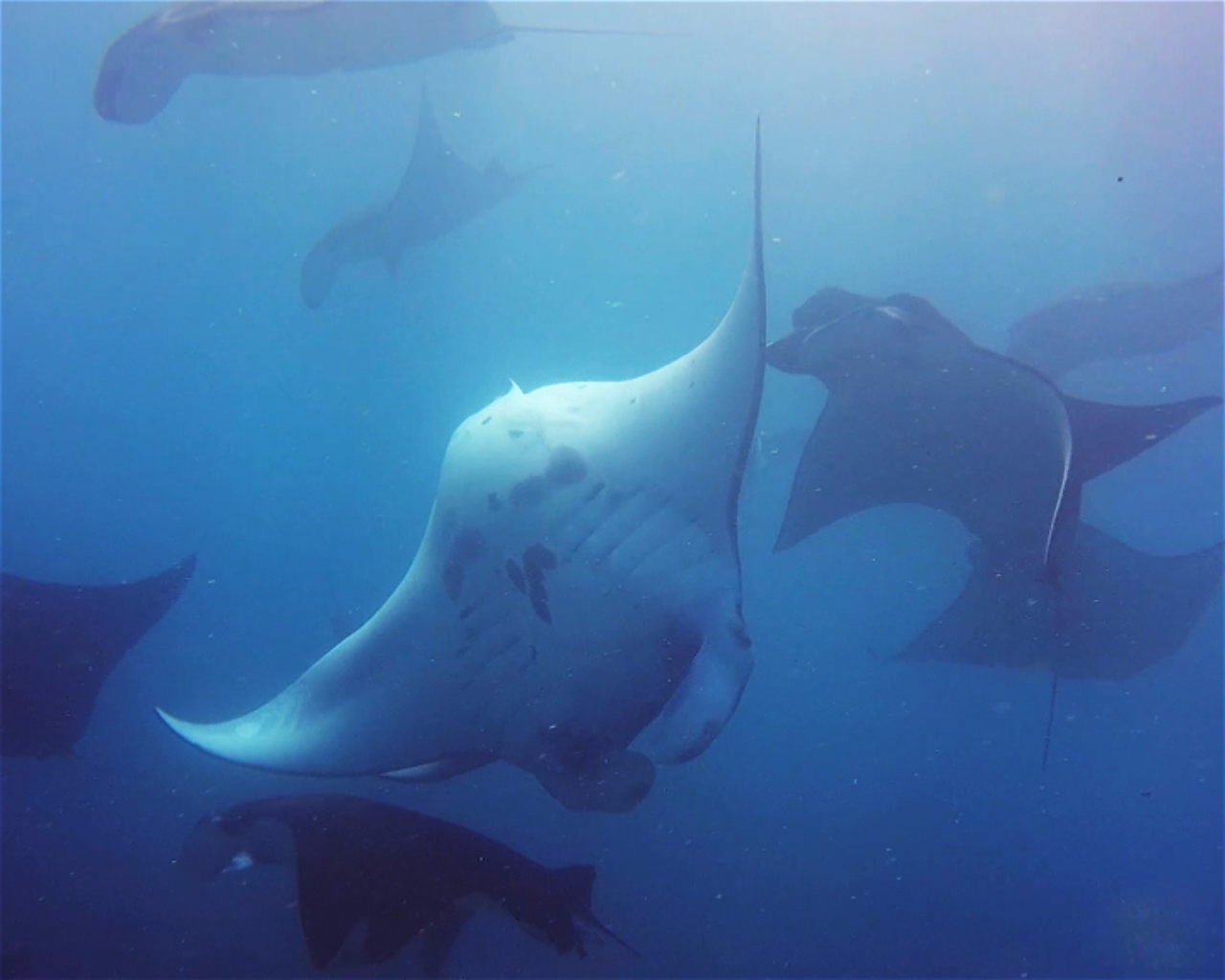 Manta Point, Nusa Penida