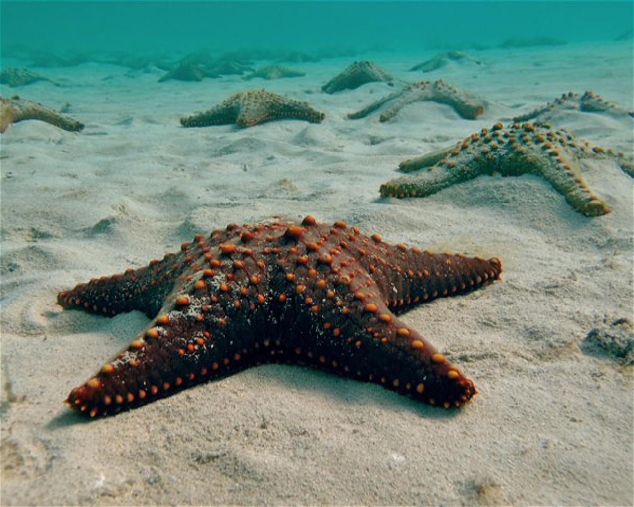 Misoli Reef