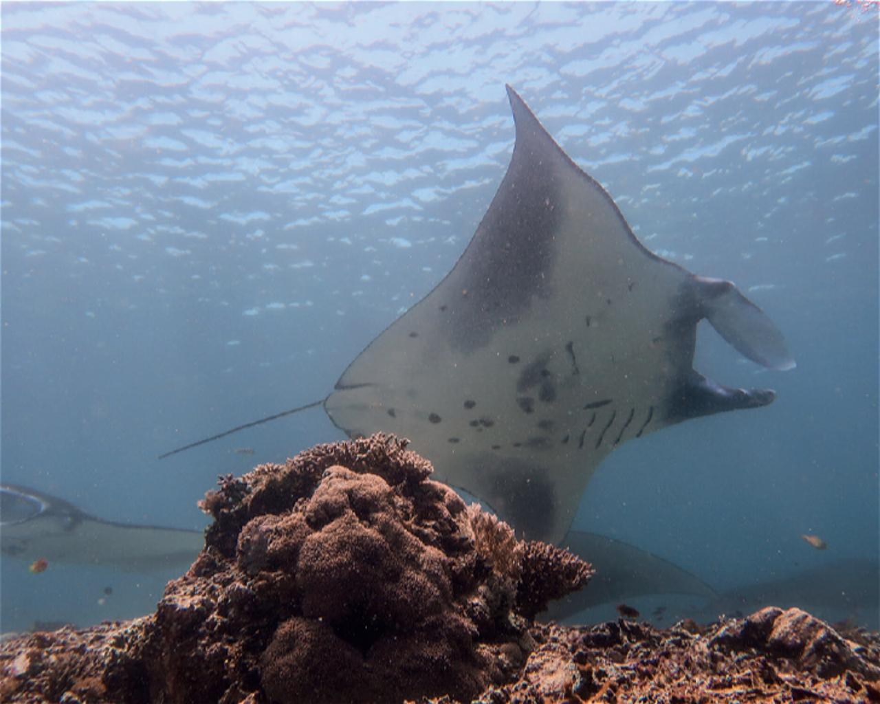Manta Point / Makassar Reef
