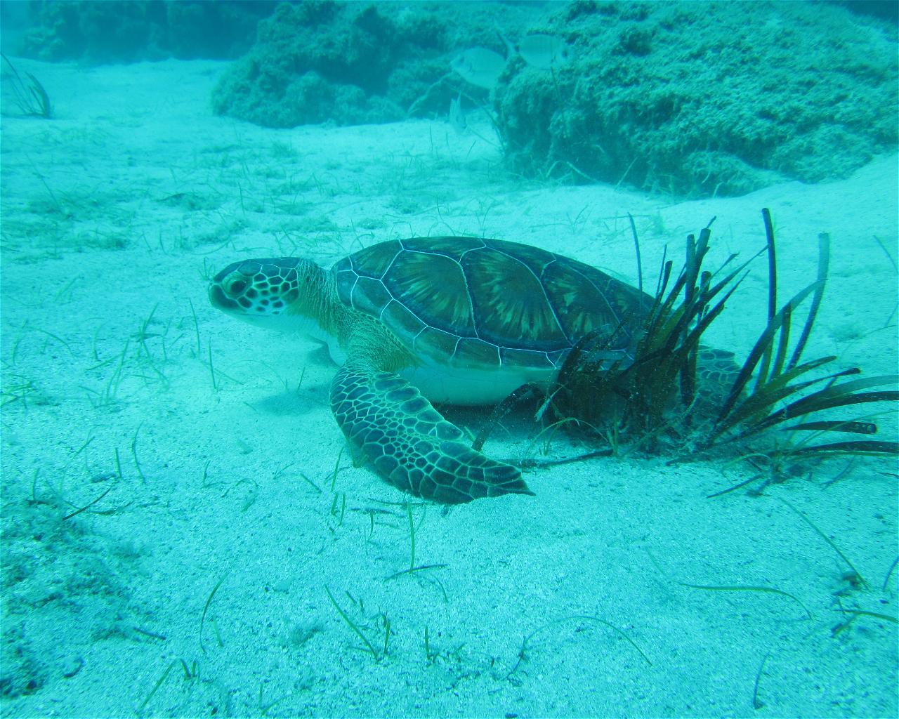 De Costa Bay