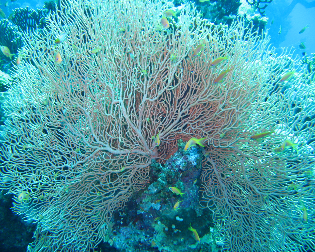 Panorama Reef North