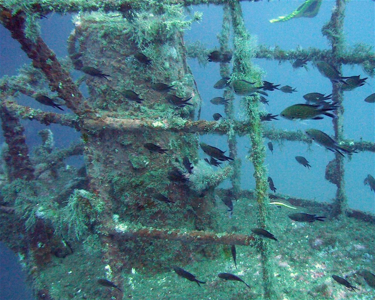Reggio Messina (Wreck)