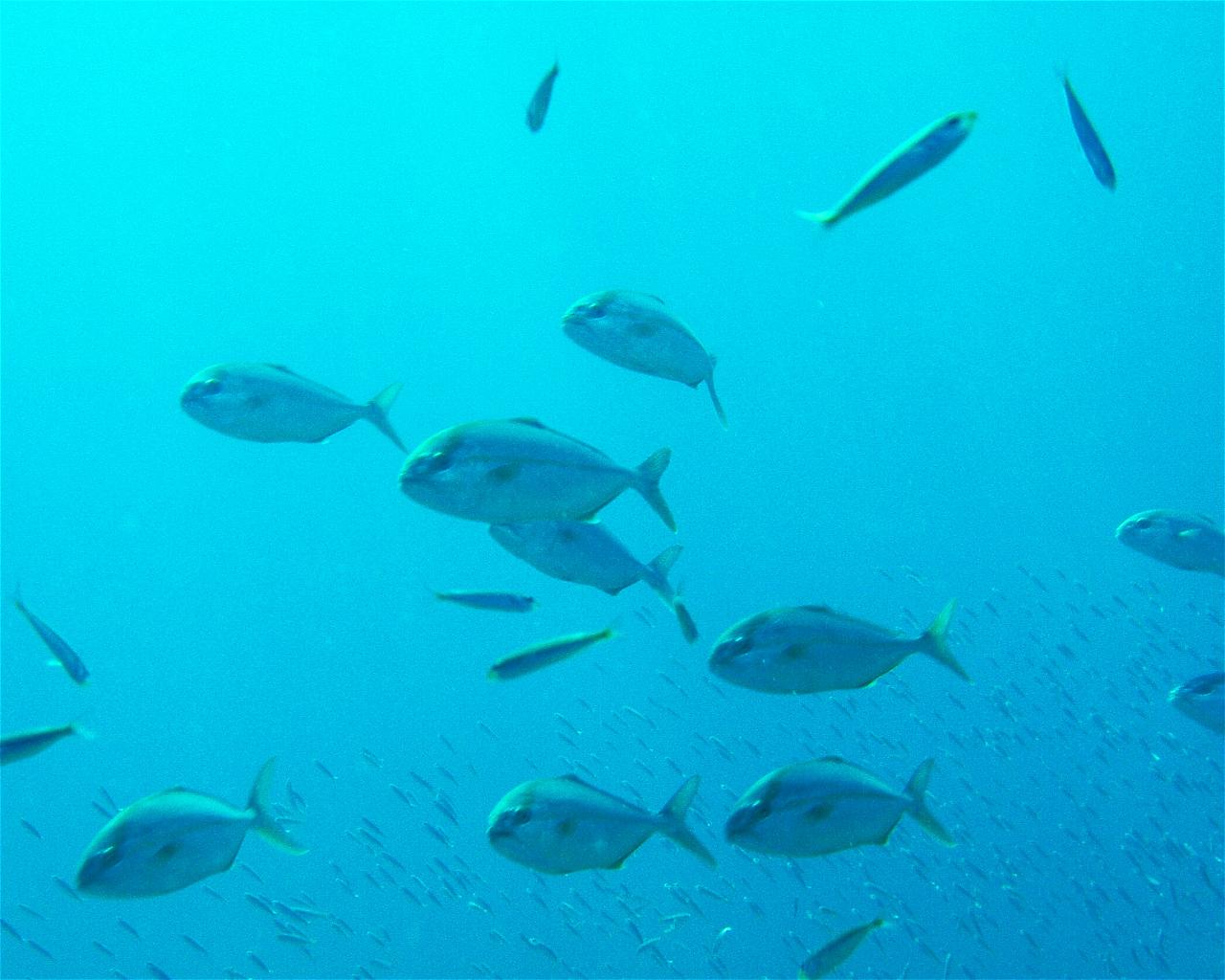 Bajo del Submarino