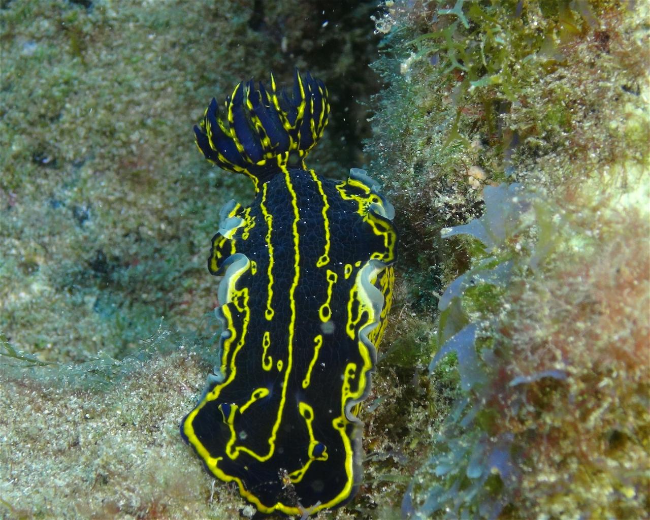 Bahia Fish